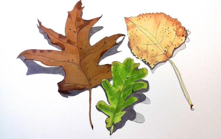 3+leaves