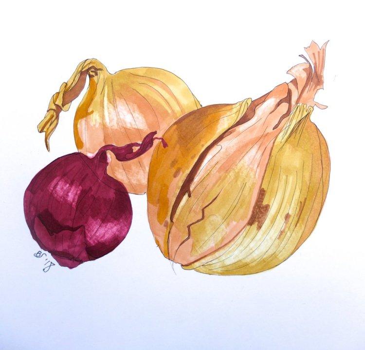 Chosen+onions+drawing