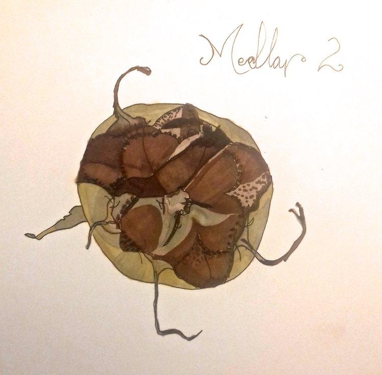 Medlar+2